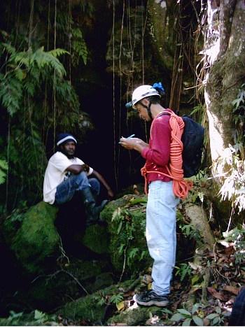 Anchovy, Jamaica - Roehampton School Cave